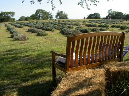 wimberley lavender farm